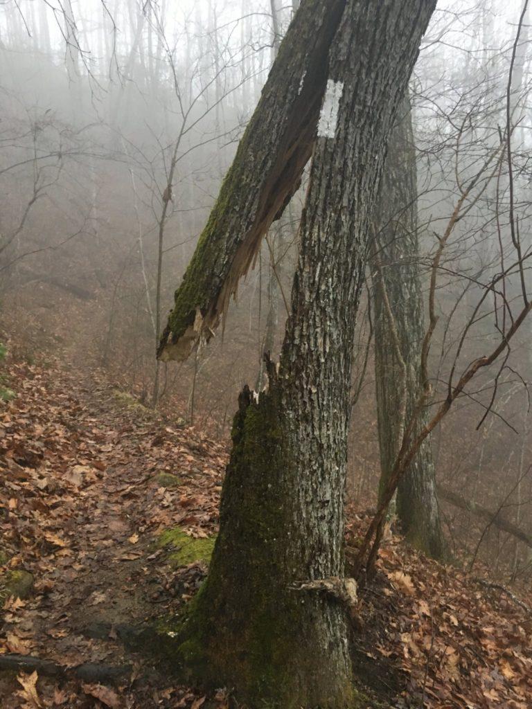 My favorite white blaze on the trail