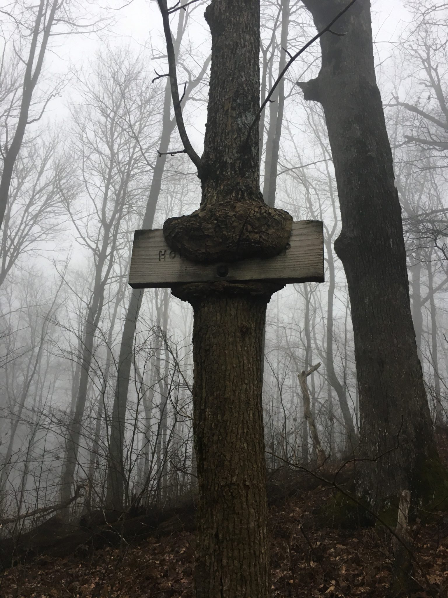 A tree gobbles up a sign