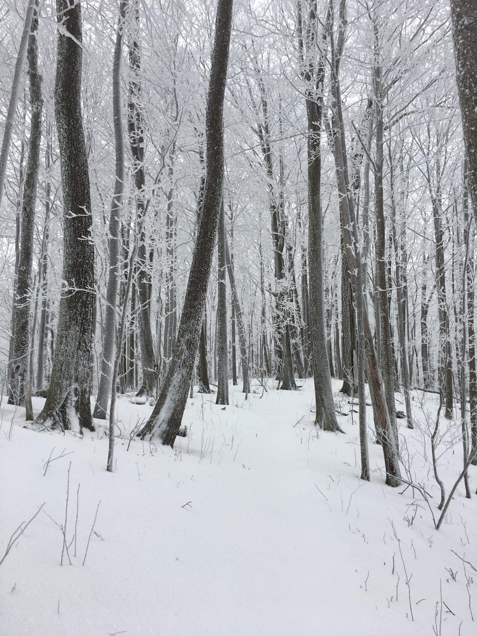 Breaking trail through fresh snow