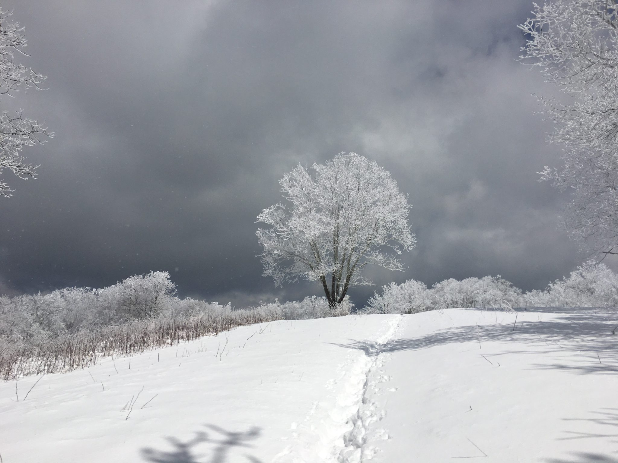 Beauty emerges from the snowstorm