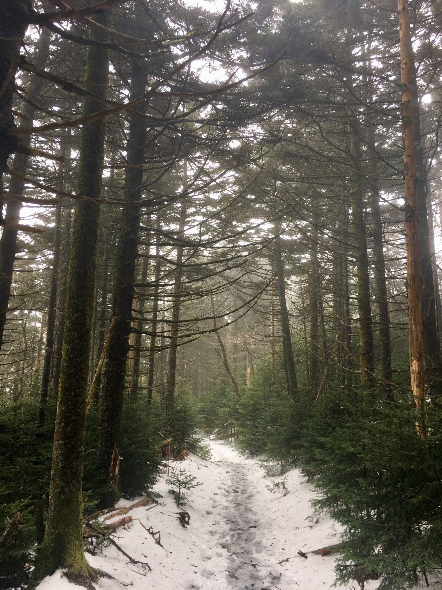 Misty morning on Roan Mountain