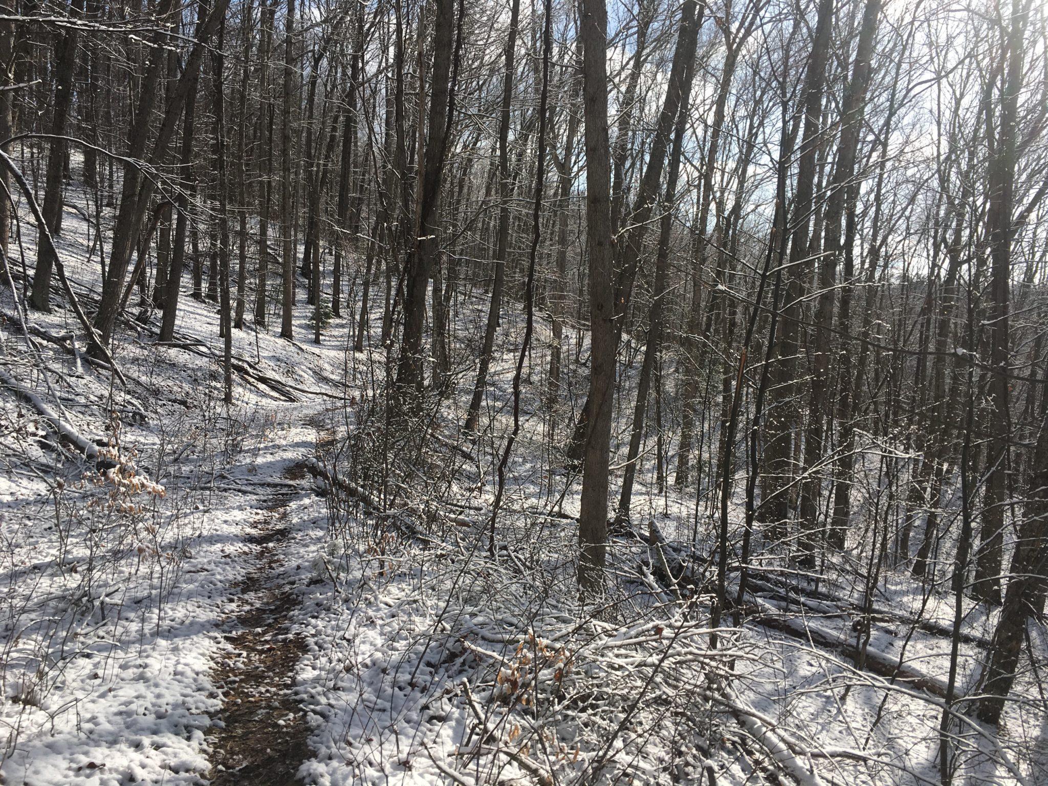 Fresh snow on the ground